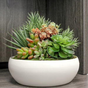 arrangement succulent mix-ceramic bowl